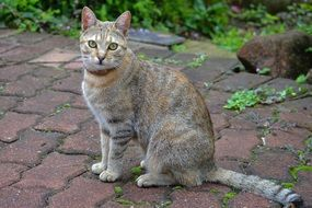 tabby Cat with cute eyes sitting
