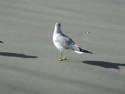 seagull on the wet sand of the beach