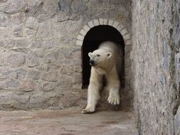 white polar bear in the Kharkov zoo
