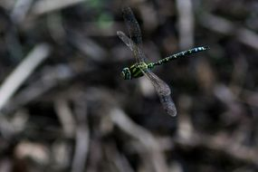 Dragonfly insect Flight scene