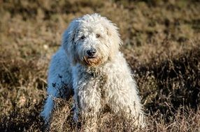 purebred dog in the mud on the field