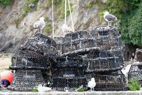 fishing nets for crabs