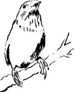 Bird on the Branch drawing
