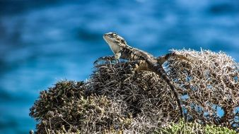 lizard on the dried plants