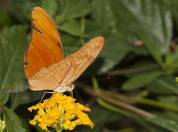 orange butterfly on the yellow garden flower