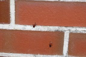 Fire bugs on the red wall