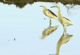 exotic birds stand in the water