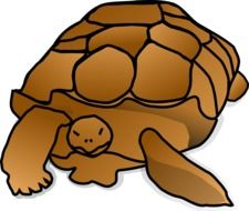 Brown turtle drawing clipart