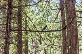 blue bird is sitting on a branch in the forest