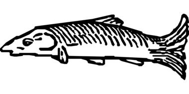 black and white graphic image of sea fish
