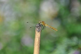green dragonfly on a wooden stick