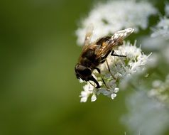 fly on a flowering plant