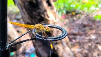 yellow dragonfly with transparent wings on a fishing rod