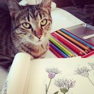 cat, pencils and coloring