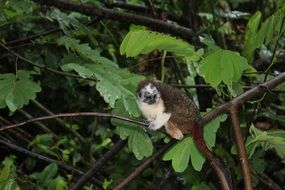 monkey on a thin branch of a tree