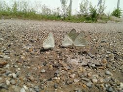 butterflies on a stone road