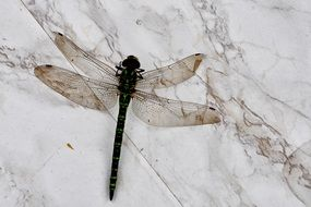 dragonfly on a white background in the garden
