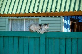 village cat on the fence