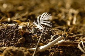 Close up photo of bird Feather on a ground