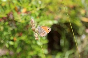 orange brown butterfly on the wild grass