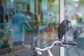 crow on a Bicycle ore