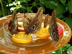 butterfly = and in a glass bowl with oranges