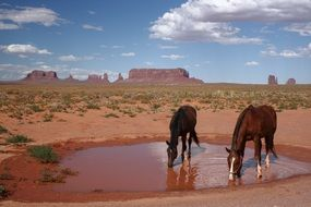 horses drink water from a puddle in the Monument Valley
