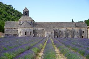 Lavender field in front of the monastery