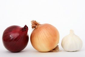 onion bulb close-up