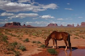 National Park valley horse