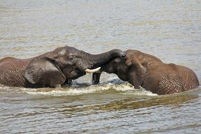 Elephants Playing Water