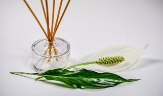 vase with incense sticks near the flower