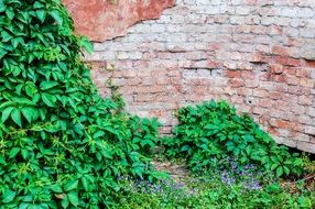 Picture of brick wall and plants