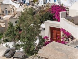 flowers and plants among white architecture on Santorini island