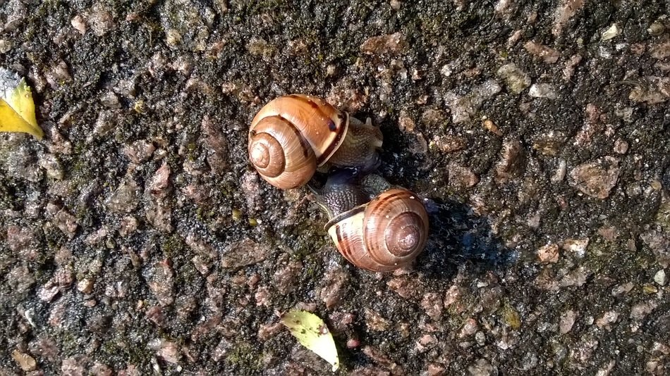 Snails Animals Mating Love