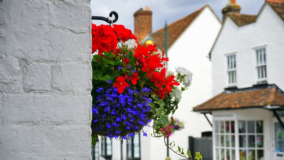 Colorful flowers on a building wall