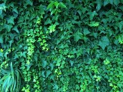 green vine on the fence