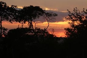 dark silhouettes of trees at sunset sky, Brazil, ceará, tiangua