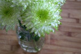 white flowers with green edges in a vase