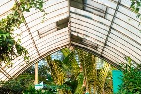 glass roof in the botanical garden