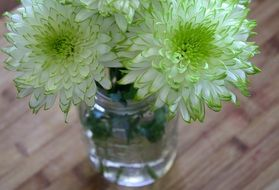 white flowers with a green middle in a vase