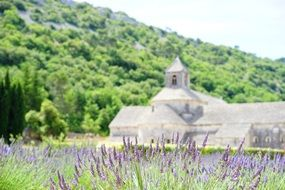 Flowers on the background of the abbaye de senanque