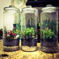 Greenforest plants in a glass