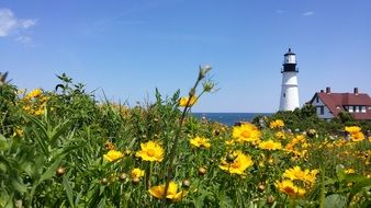 glade of yellow flowers and a lighthouse