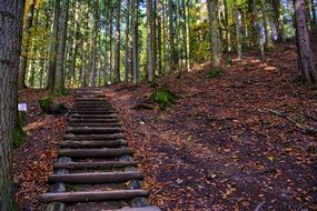 Mountains Pieniny Wooden staircase in the woods
