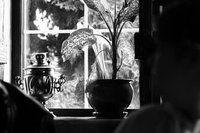 Black and white photo of the samovar and plant