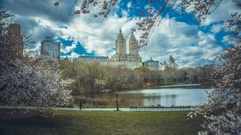 New York cherry tree at spring