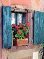 red geranium in a pot on a window in Alsace