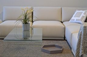 beige sofa and glass coffee table in the living room