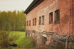 Brick Walls in a forest